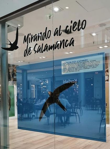 Mirando al cielo de Salamanca. Exposición